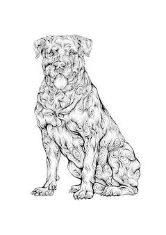 Desenho de mão de cachorro rottweiler