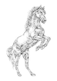 Desenho de mão de cavalo empinado