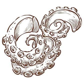 Desenho de mão de esboço de vetor de tentáculo de polvo