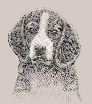 Desenho de mão do cão de estimação beagle