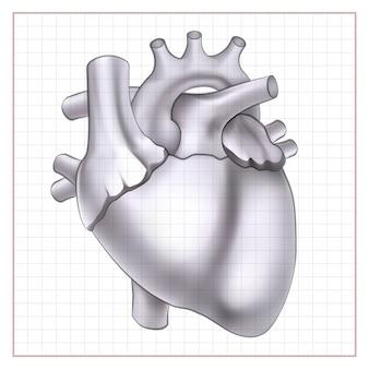 Desenho de órgão médico