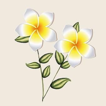 Desenho de orquídea