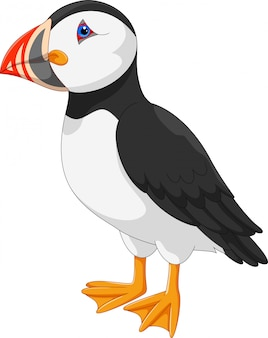 Desenho de papagaio-do-mar atlântico