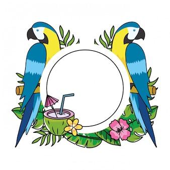 Desenho de papagaios tropicais bonitos