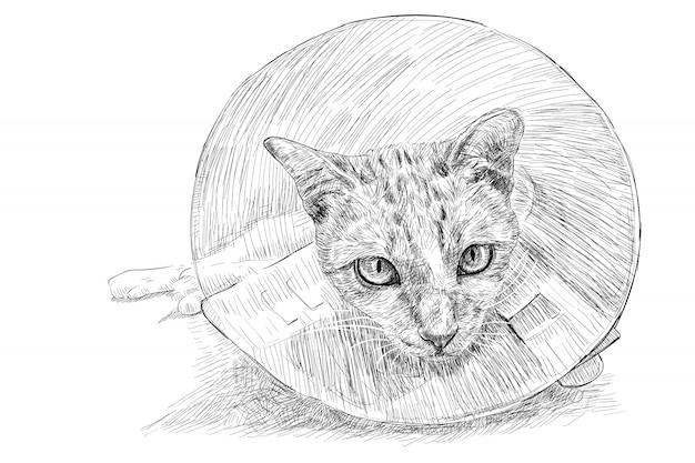 Desenho de um gato usando uma coleira elisabetana