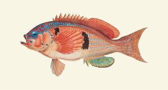 Desenho de um peixe