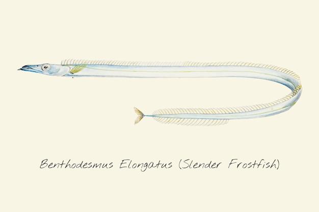 Desenho de um peixinho delgado