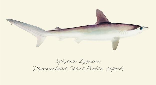 Desenho de um tubarão-martelo
