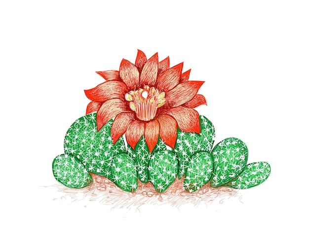 Desenho desenhado à mão da planta do cacto airampoa