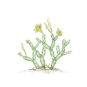 Desenho desenhado à mão de hatiora ou cacto de páscoa