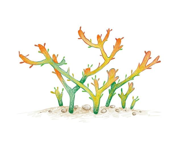 Desenho desenhado à mão do cacto euphorbia tirucalli
