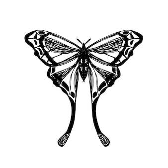 Desenho detalhado de mariposa exótica. borboleta tropical isolada no branco. vetorial mão ilustrações desenhadas de inseto com asas. elemento para embalagem, rótulo, logotipo, design de ícone.