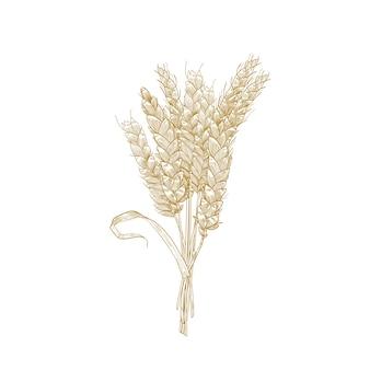 Desenho detalhado natural elegante de espigas de trigo.