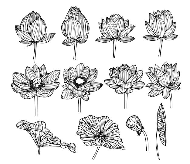 Desenho e esboço da flor de lótus em preto e branco