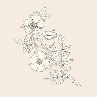 Desenho elegante de flores rosa com caule e folhas. bela planta de floração selvagem desenhada à mão com linhas de contorno.