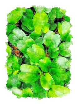 Desenho em aquarela de folhas verdes