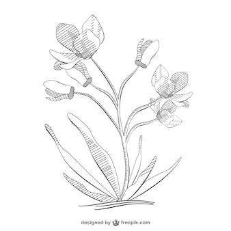 Desenho esboço flor