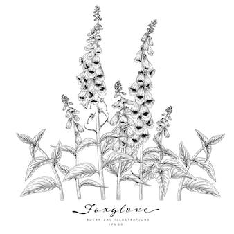 Desenho floral conjunto decorativo. desenhos de flor dedaleira.
