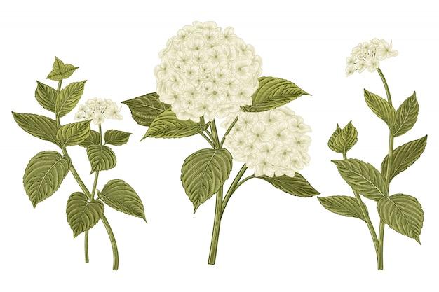 Desenho floral conjunto decorativo. desenhos de flores de hortênsia branca.