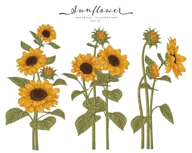 Desenho floral conjunto decorativo. desenhos de girassol. Vetor Premium