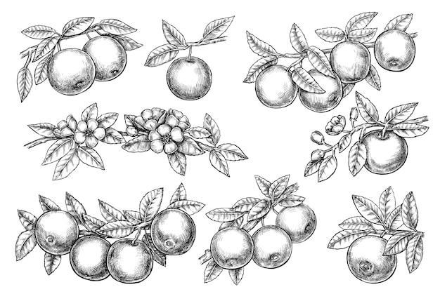 Desenho gráfico a tinta conjunto flor maçã galho