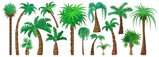 Desenho isolado palmeira definir ícone.