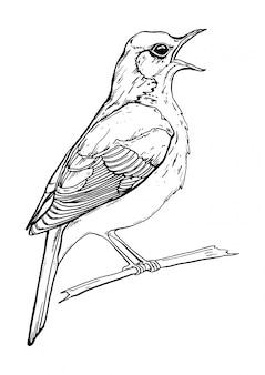 Desenho preto e branco de um pássaro cantando
