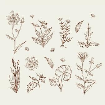 Desenho realista com flores silvestres e ervas