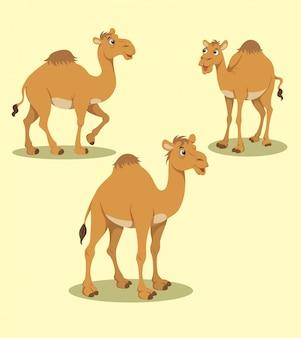 Desenho vetorial camelo