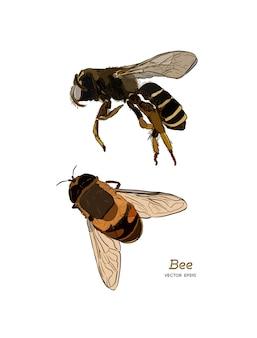 Desenho vetorial de abelha mel vintage.