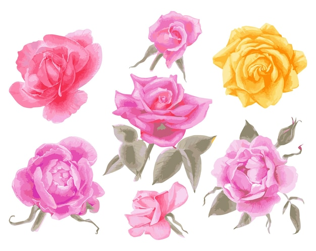 Desenho vetorial de aquarela conjunto de rosas ilustração de flores no jardim isoladas em branco