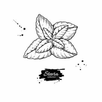 Desenho vetorial de estévia
