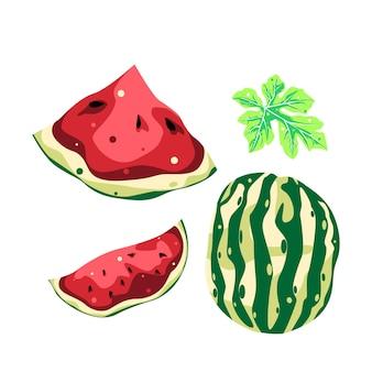 Desenho vetorial de frutas para coleção de flores e folhas de melancia