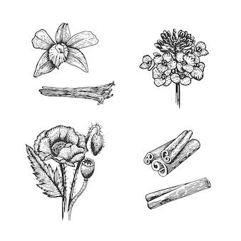 Desenho vetorial ilustração de especiarias mão desenhada ervas de cozinha, semente de papoula, mostarda, baunilha, canela