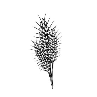 Desenho vintage com trigo isolado no fundo branco. trigo, arroz, aveia, ilustração vetorial de cevada. colheita agrícola. estilo gravado.