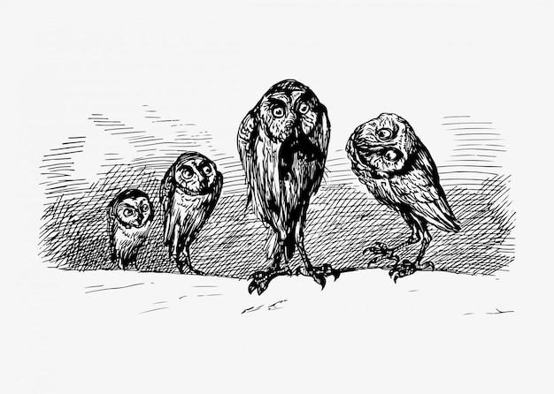 Desenho vintage de corujas assustadoras