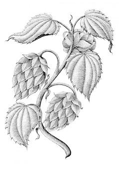 Desenho vintage de lúpulo por tinta isolado no fundo branco