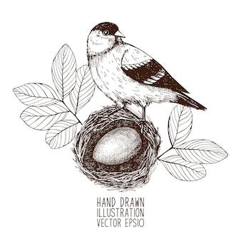 Desenho vintage de pássaros no ninho