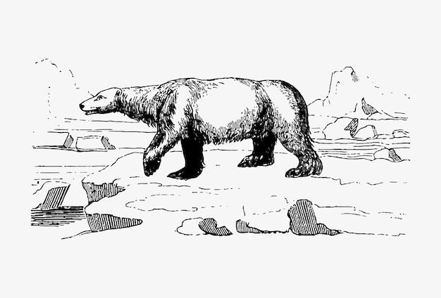 Desenho vintage de urso polar