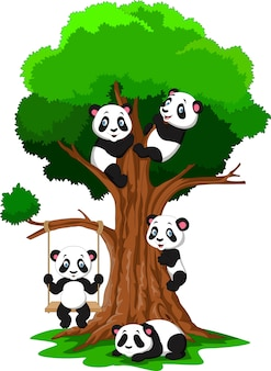Desenhos animados bebê pandad jogando em uma árvore