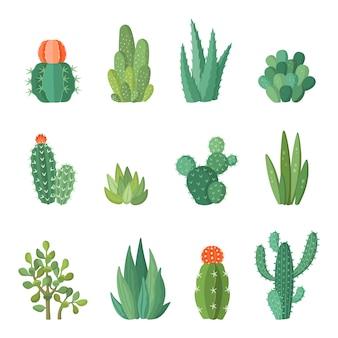 Desenhos animados coloridos cactos e suculentas conjunto de desenhos animados. flores e plantas decirativas. ilustração de ícones isolados