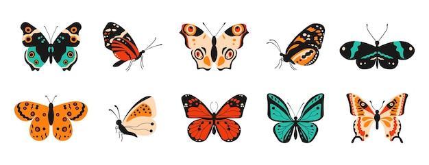 Desenhos animados de borboletas insetos voadores coloridos de primavera e verão com elementos de padrão nas asas