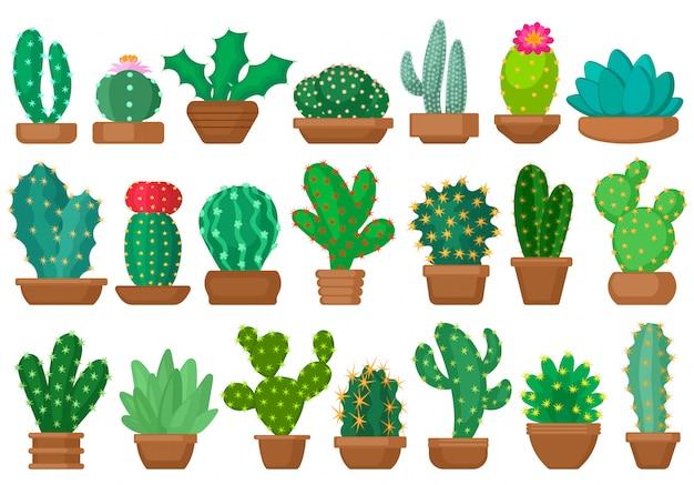 Desenhos animados de cactos de planta doméstica definir ícone. cacto de ilustração em fundo branco. desenhos animados isolados conjunto cactos de plantas de casa.