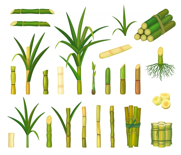 Desenhos animados de cana-de-açúcar isolado ícone definido. desenhos animados definir ícone cana.