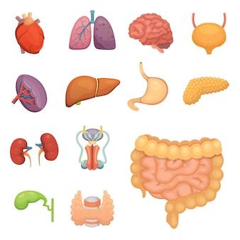 Desenhos animados de órgãos humanos com ilustrações