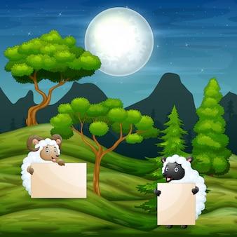 Desenhos animados duas ovelhas segurando cartaz em branco no campo
