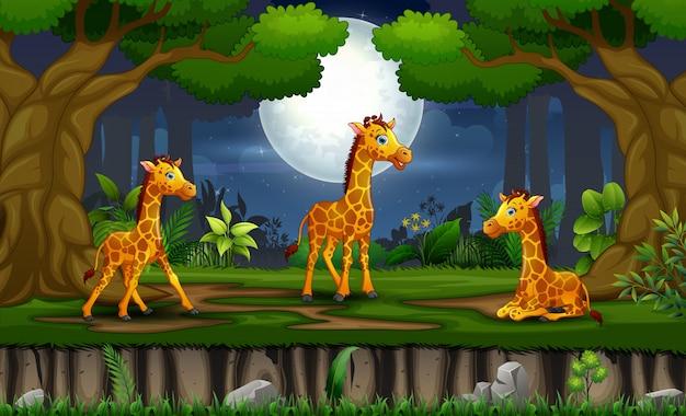 Desenhos animados três girafas desfrutando na paisagem noturna