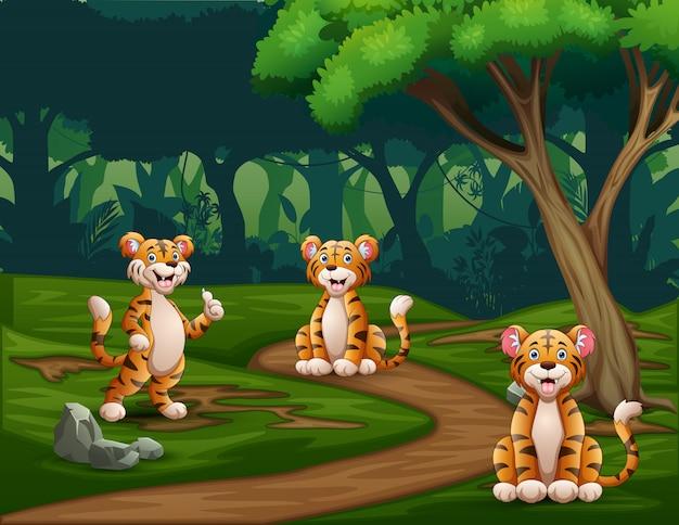 Desenhos animados três tigres desfrutando na floresta