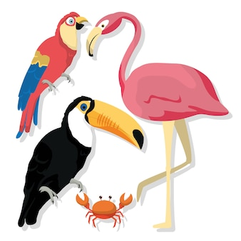 Desenhos de aves exóticas
