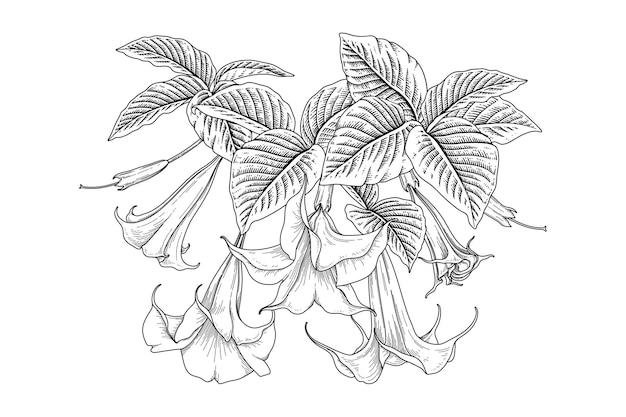 Desenhos de brugmansia da flor da trombeta dos anjos